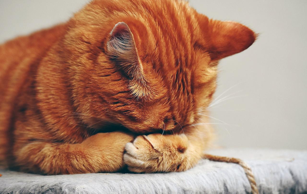 Trucs et astuces animaux trucs et astuces maison - Repulsif chat jardin naturel ...